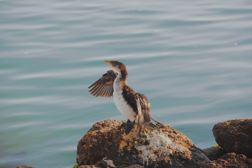 brown and white bird on rock