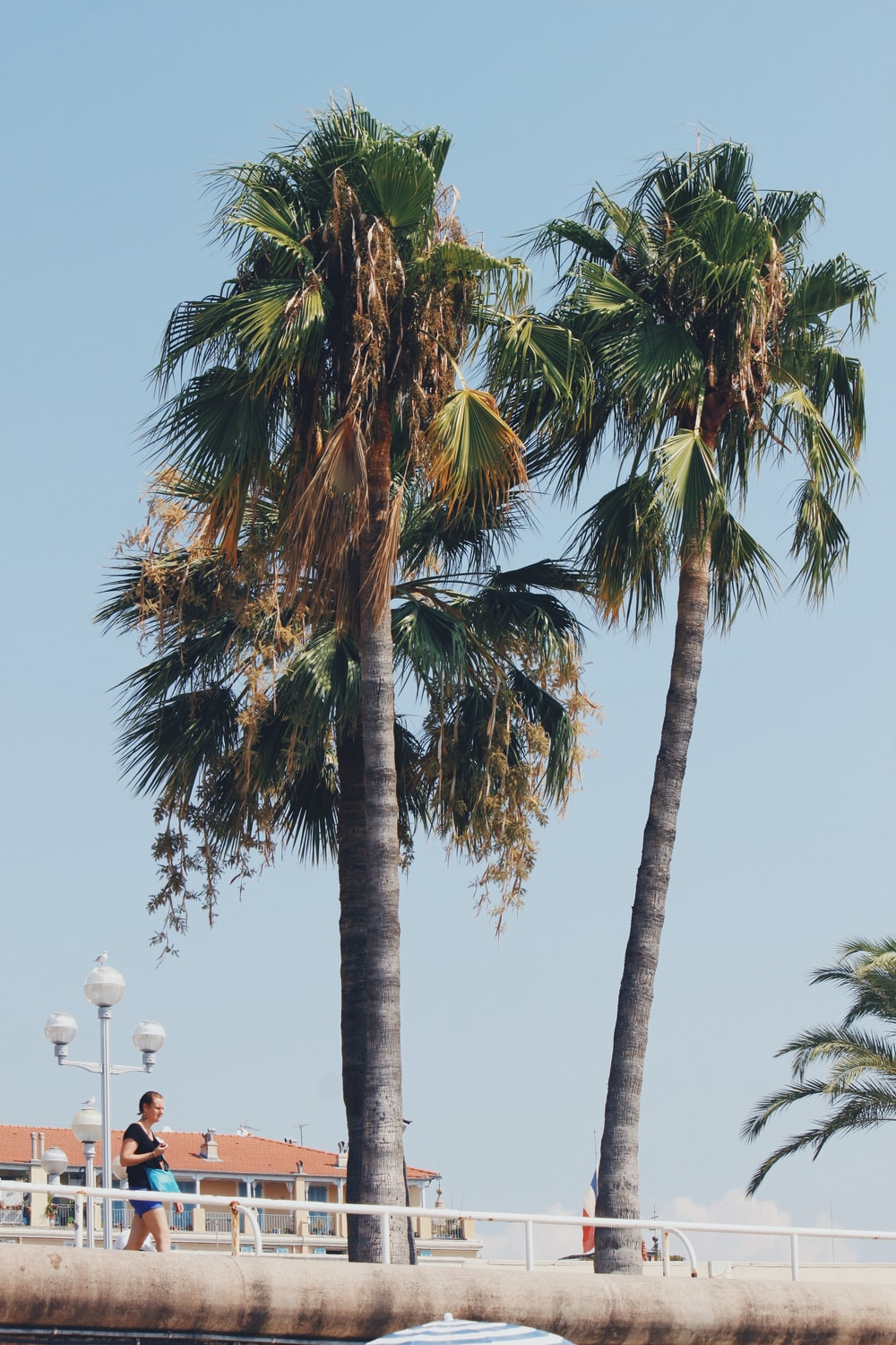 man standing beside coconut palm trees