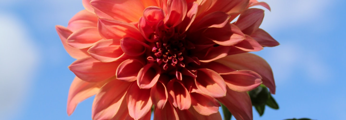 Annuals and Perennials that Are Popular Garden Choices
