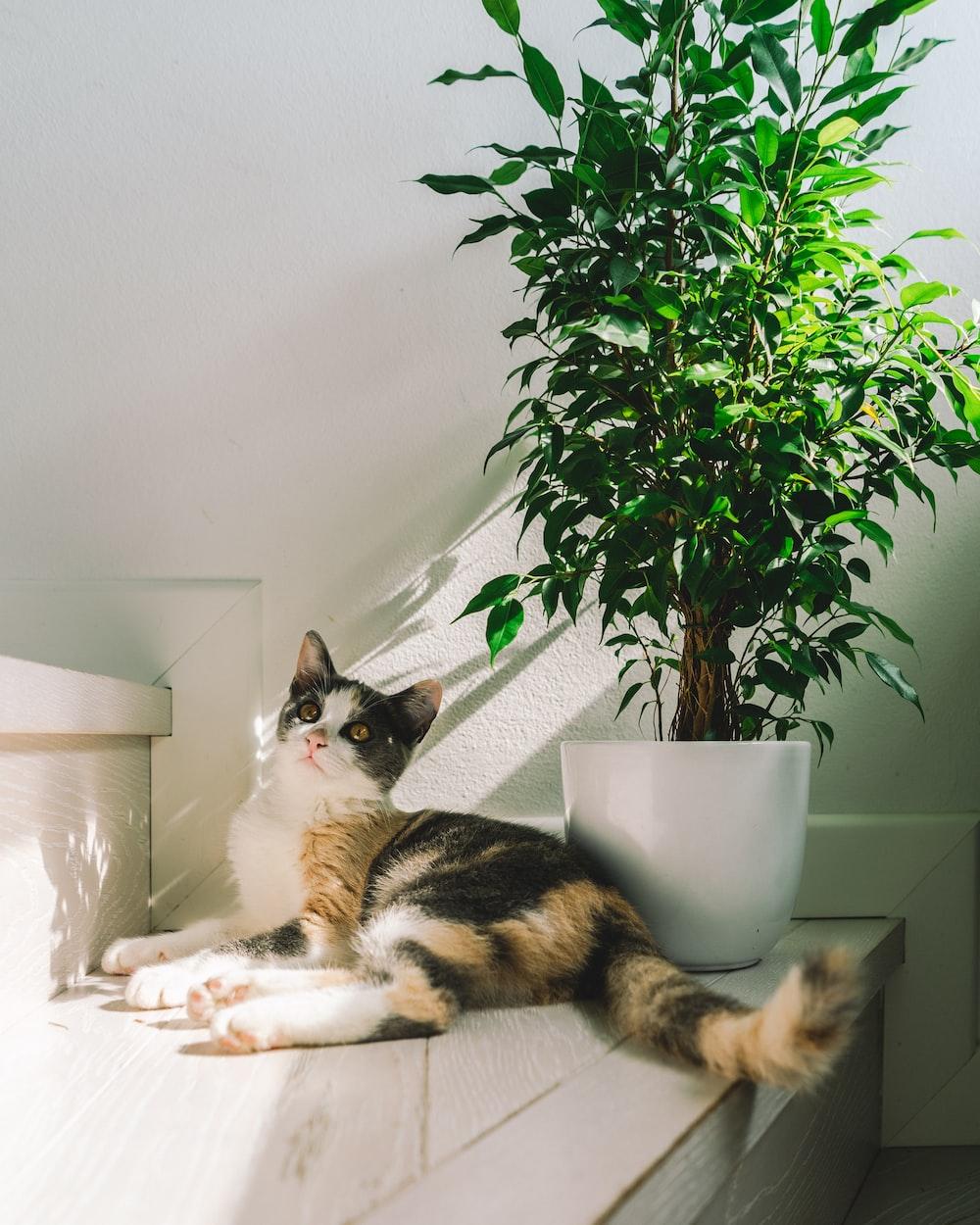 cat lying beside plant in plant pot