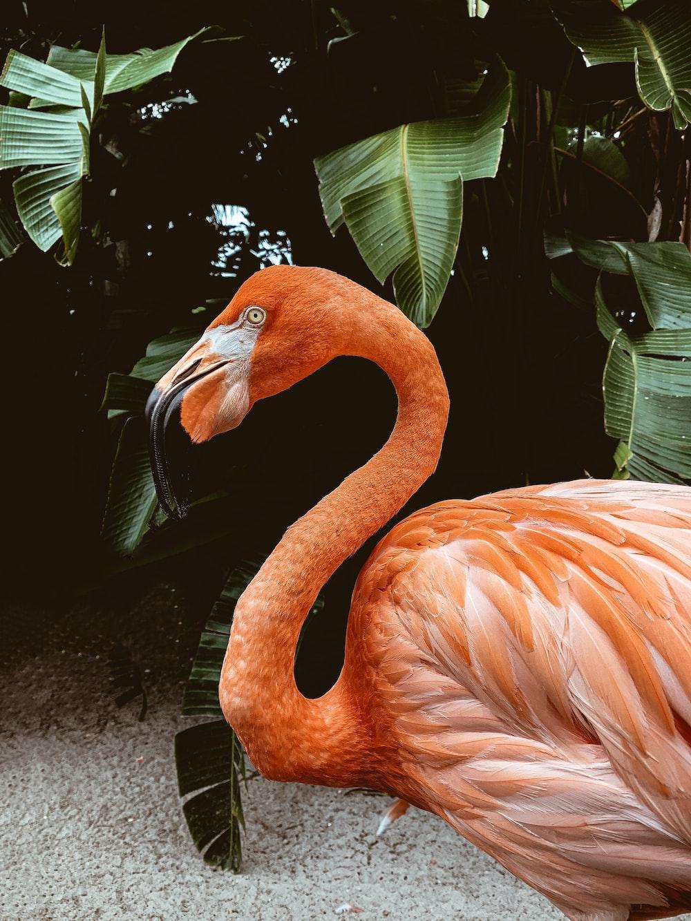 pink flamingo standing beside green plant