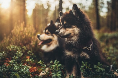 two puppies sitting on groud