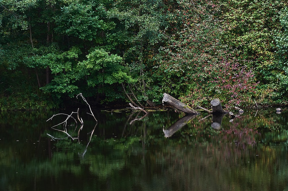 brown lake near green-leafed plant and driftwood