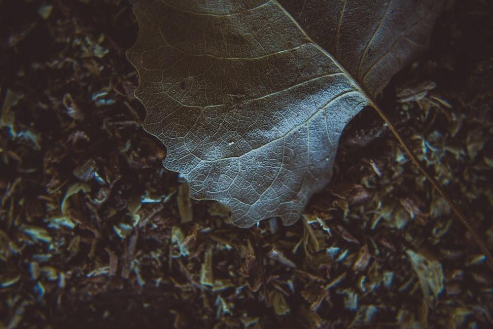 green leaf on ground
