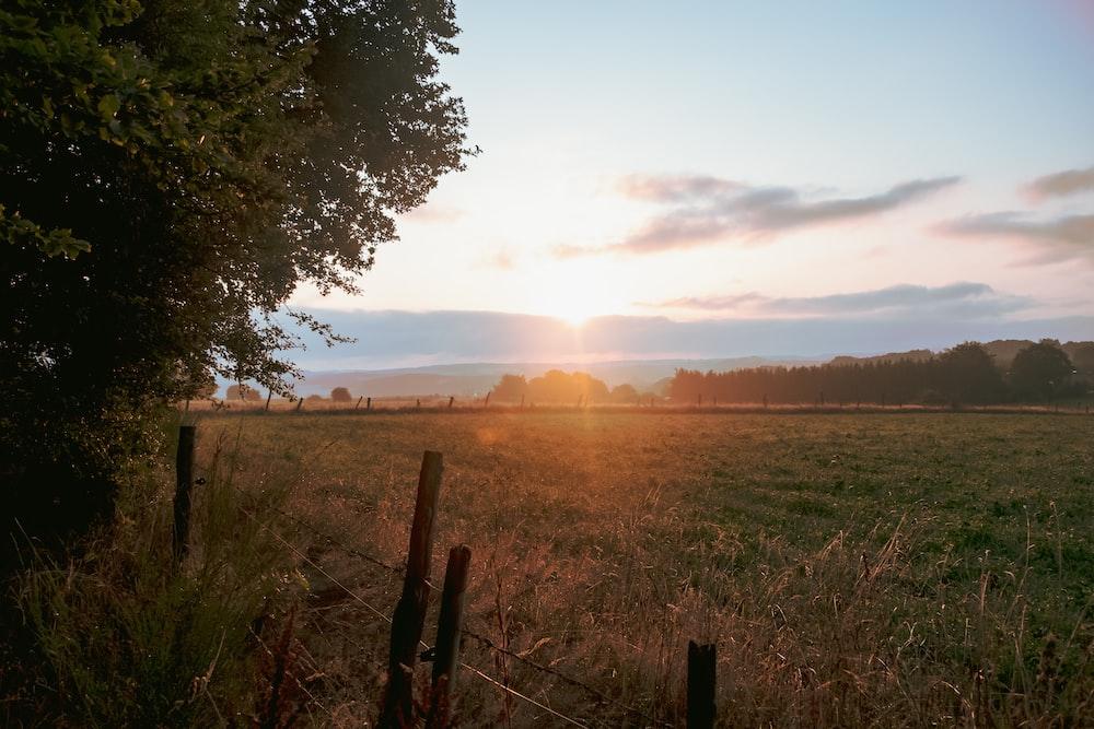 green grassland photo during sunset