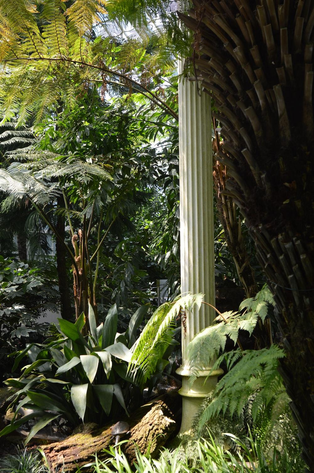 column standing beside tree