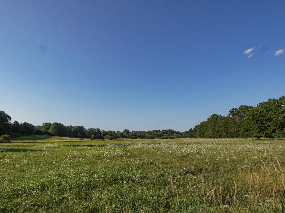 green grass field scenery