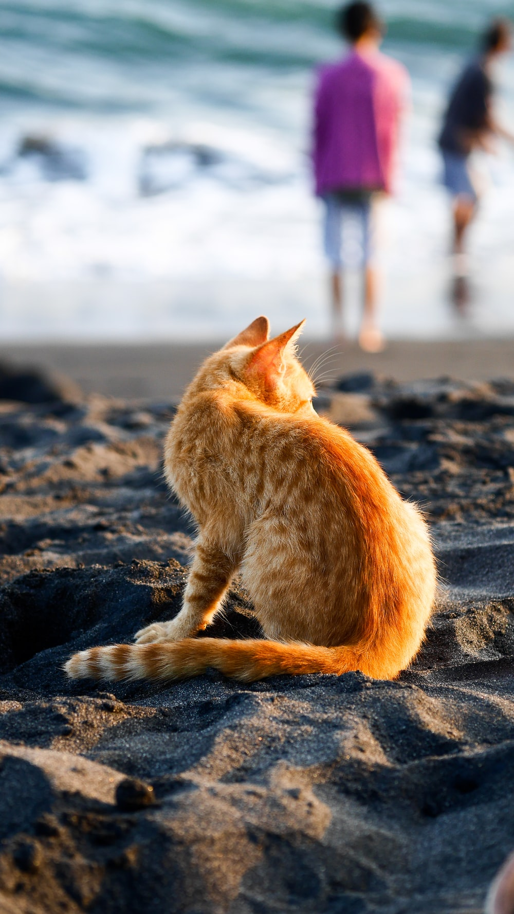 cat on seashore
