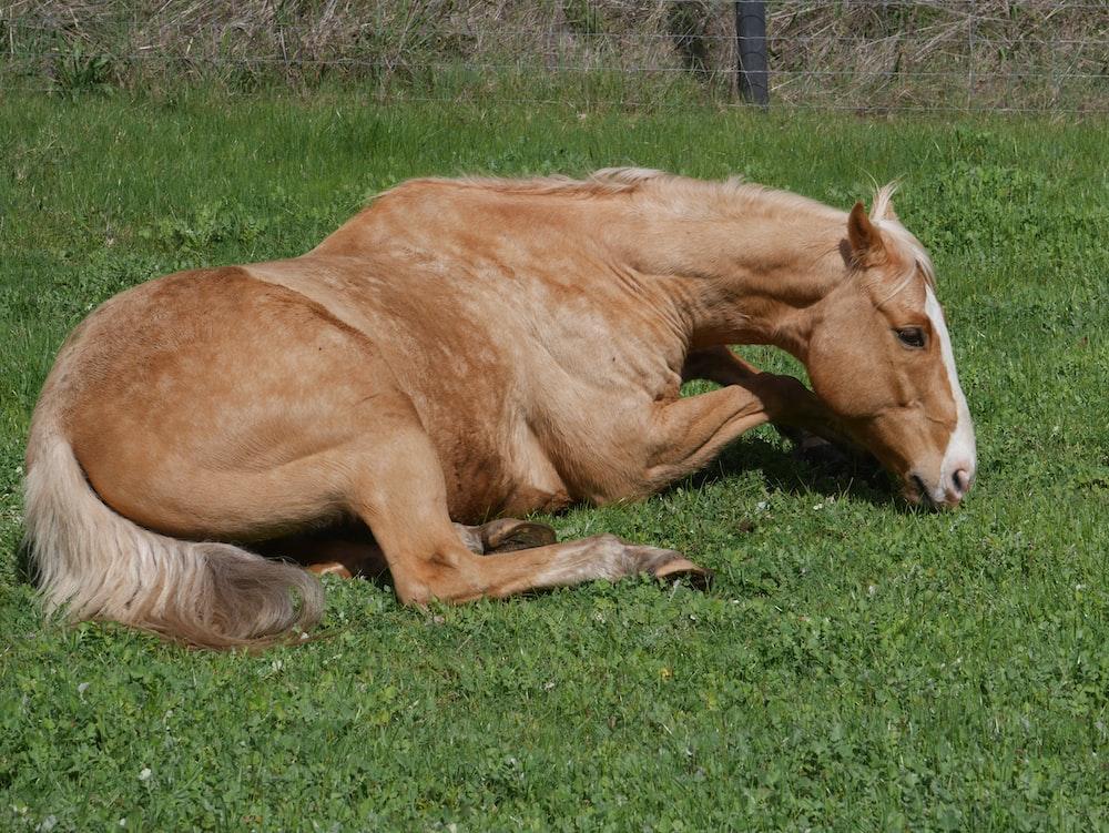 white and tan horse