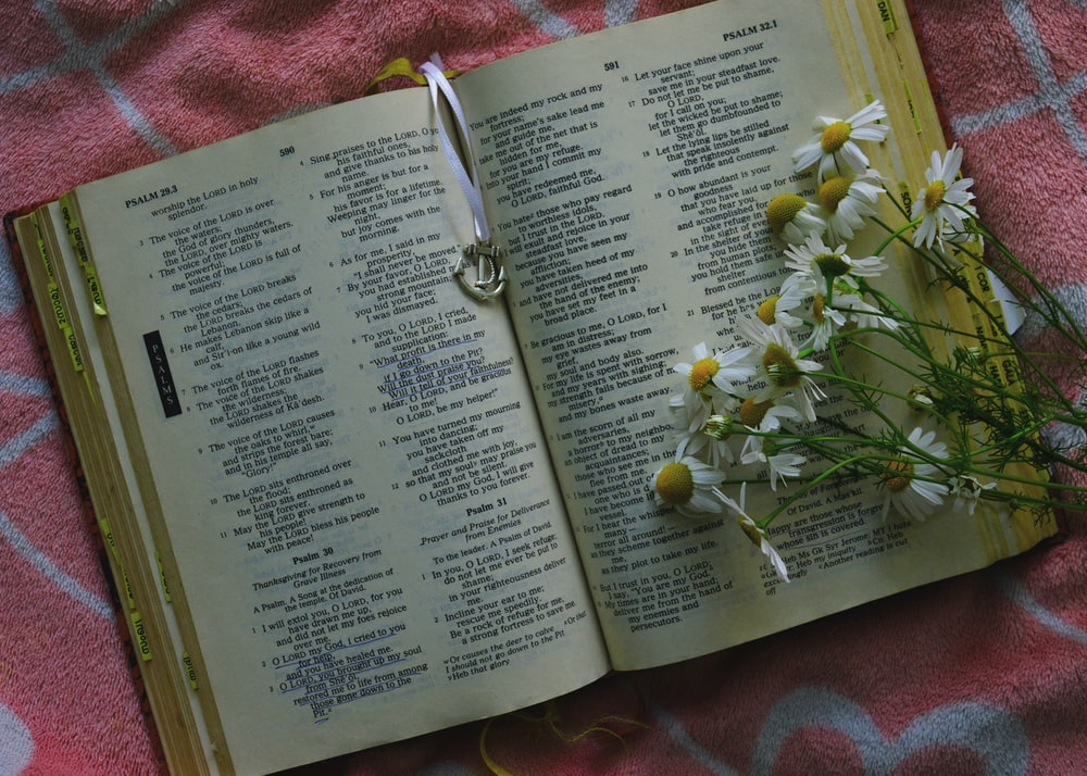 white and yellow daisy flowers on open Bible