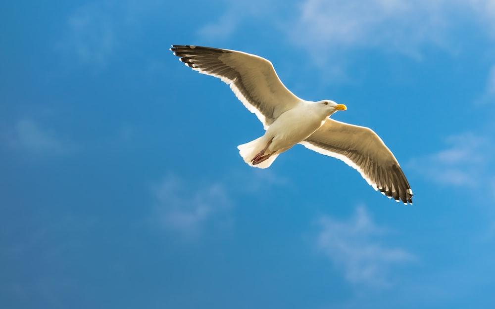 white bird in flight under blue sky