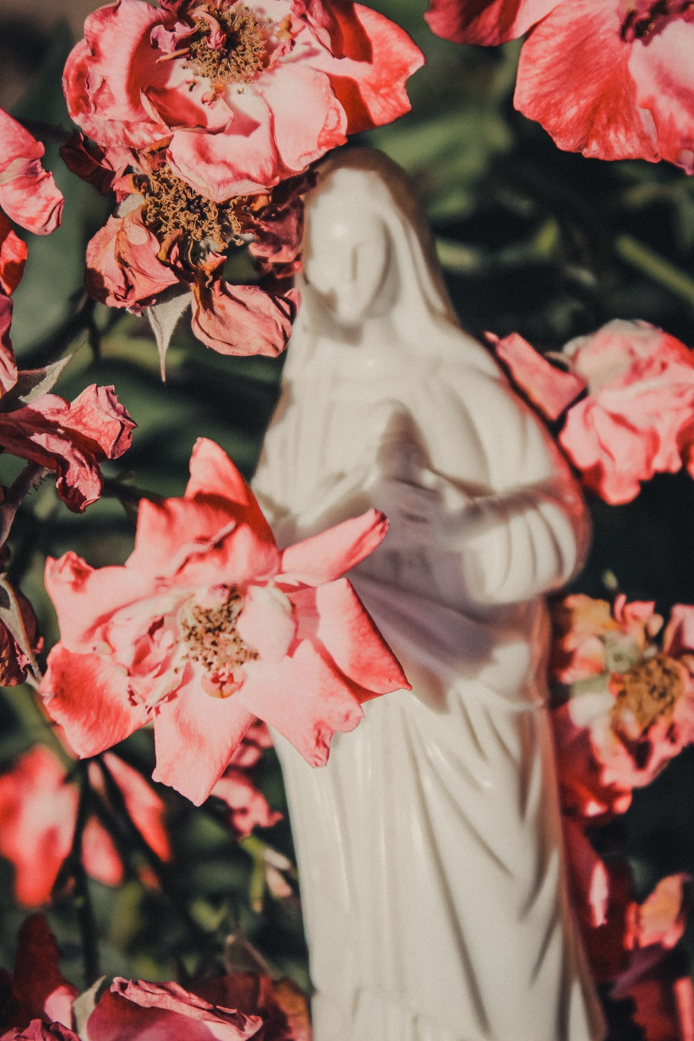 white mother Mary figurine behind pink flowers