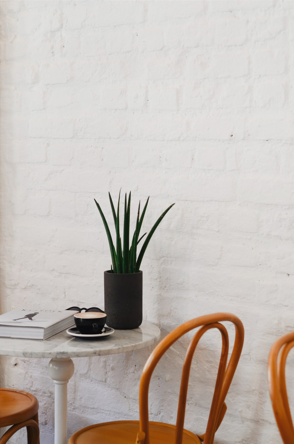 pot of plant and cup on table