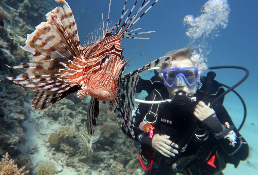 underwater photography of diver beside large red and brown fish