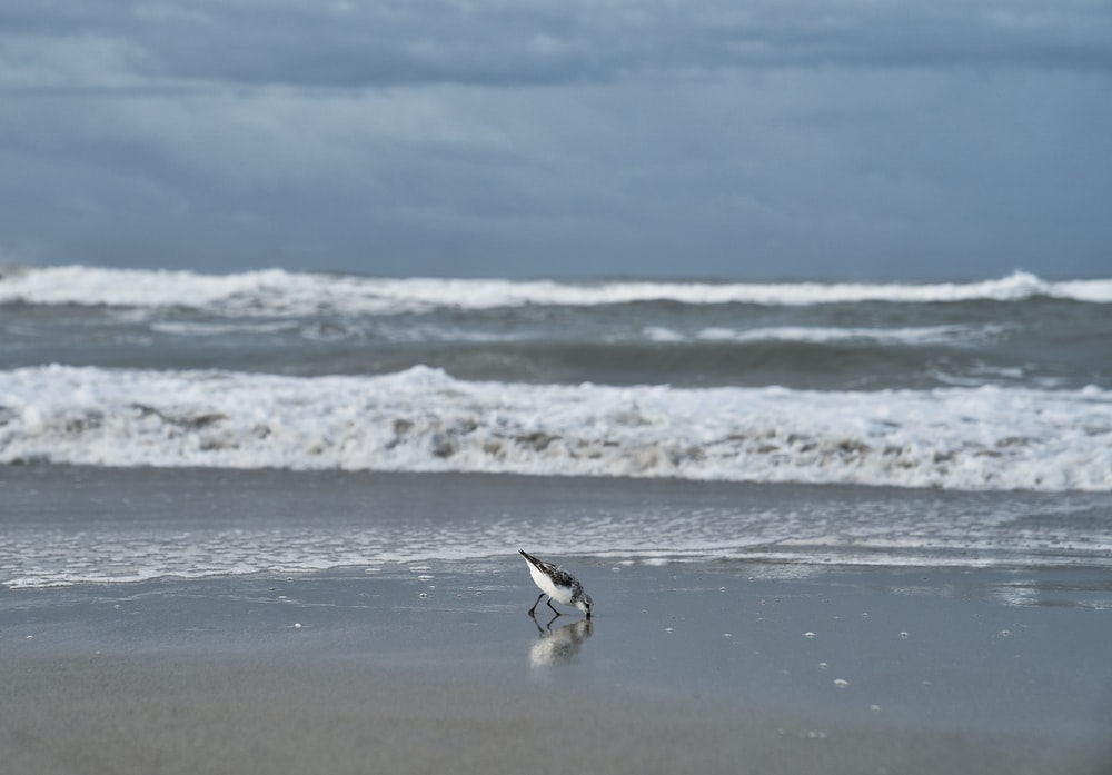 gull on shore