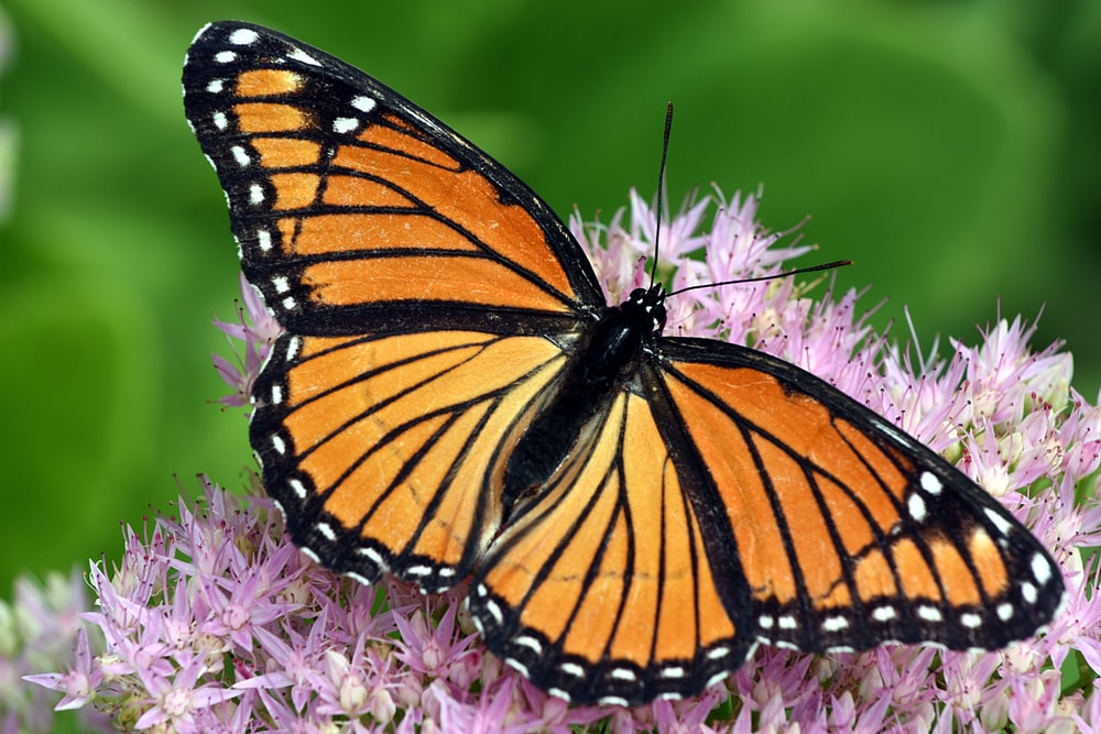 shallow focus photo of orange butterfly