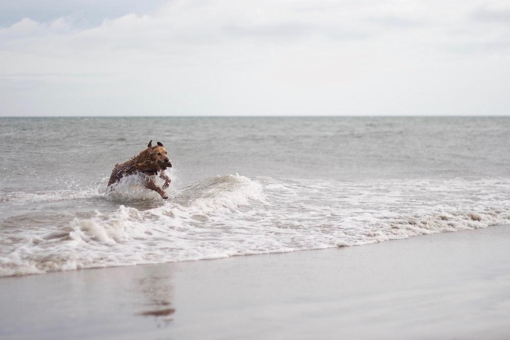 dog on beach line