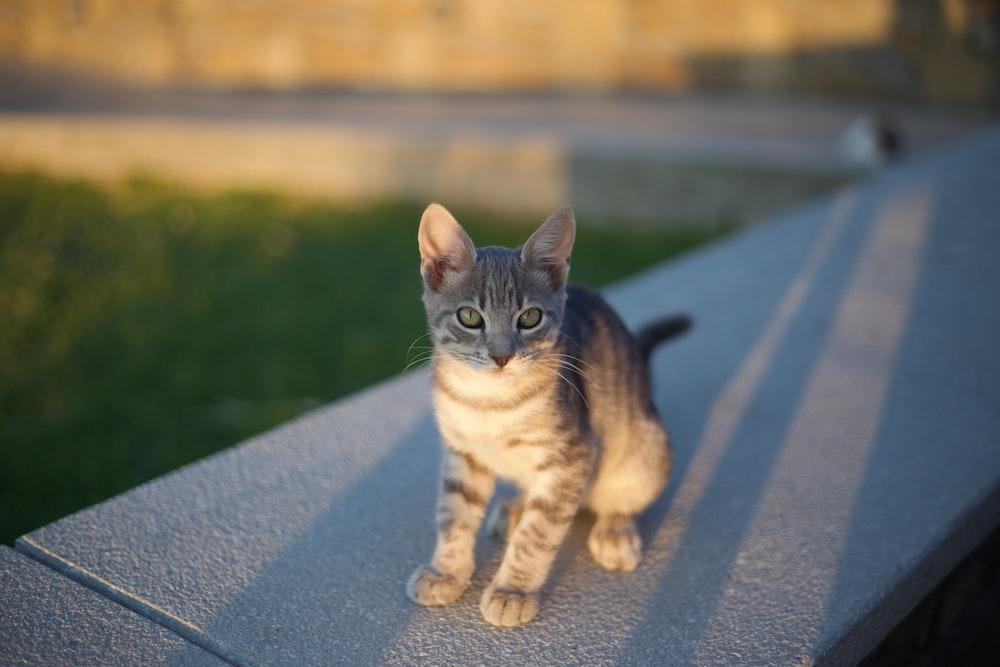 grey tabby kitten on concrete surface