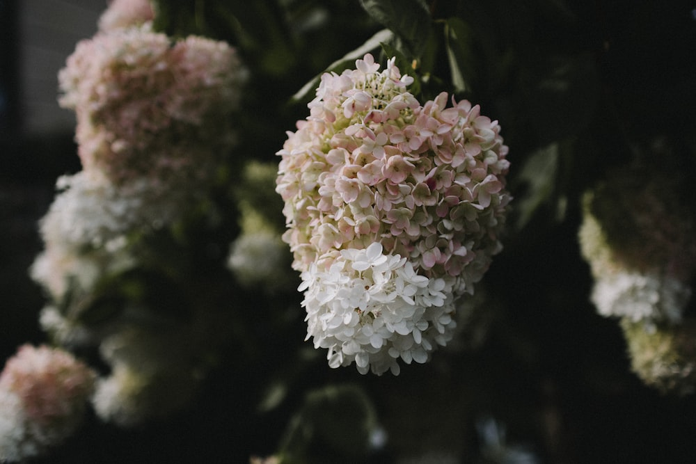 low-angle photography of white and pink cluster flowers