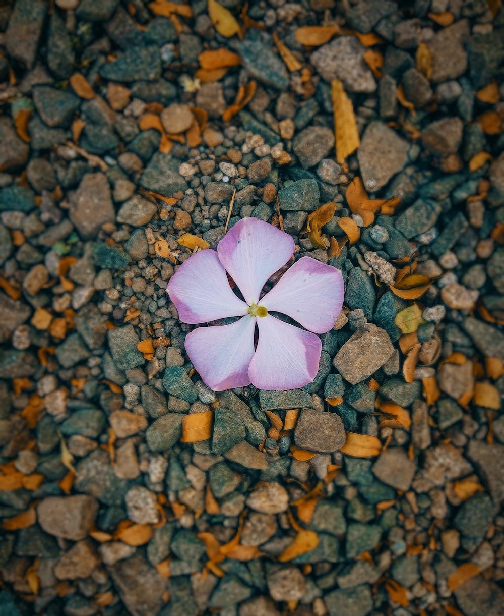 macro photography of purple plumeria flower