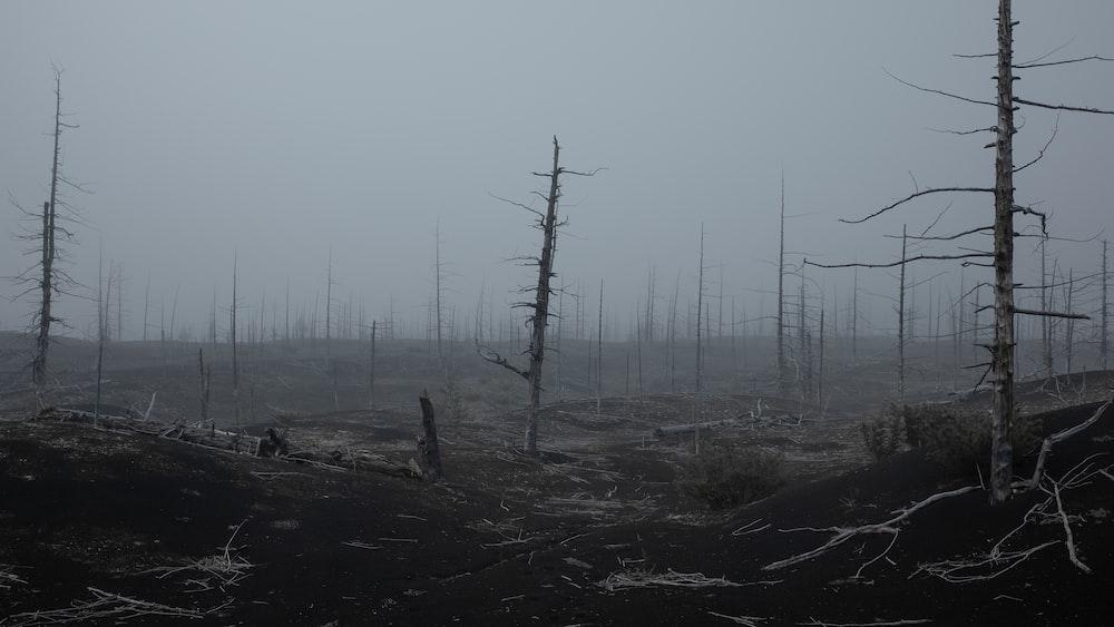 bare tree lot