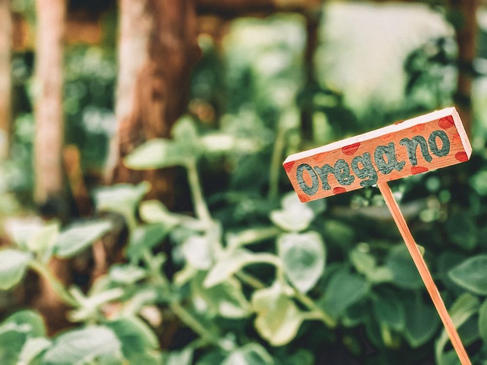 Oregano signage