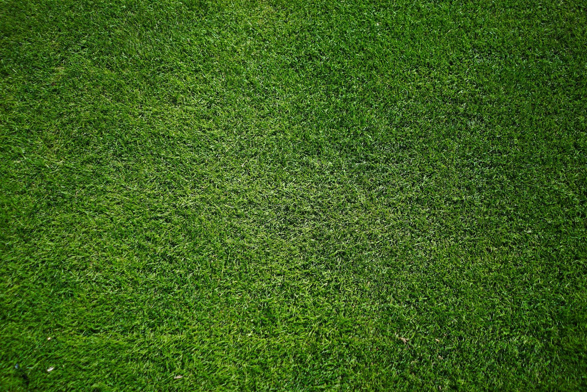 Grass Simulatorレビュー