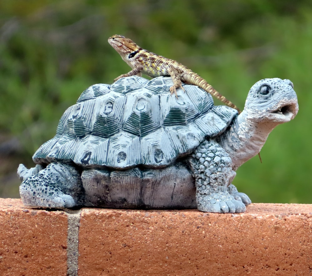 brown lizard on turtle statue