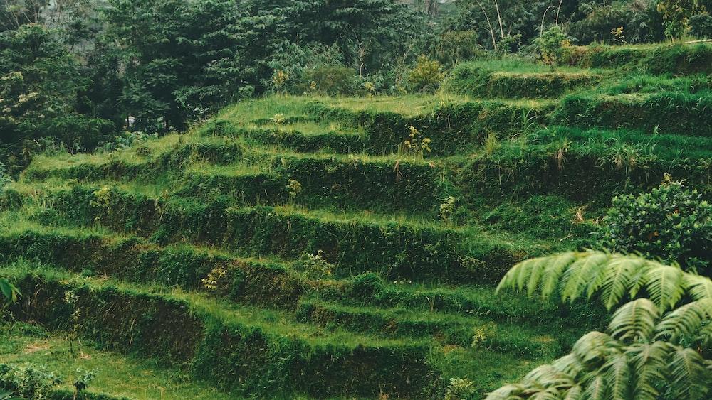 green stair grass field