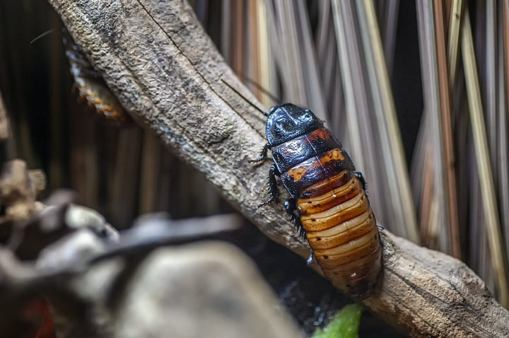 4 Reasons Why Dubia Roaches Are Better for Your Pets