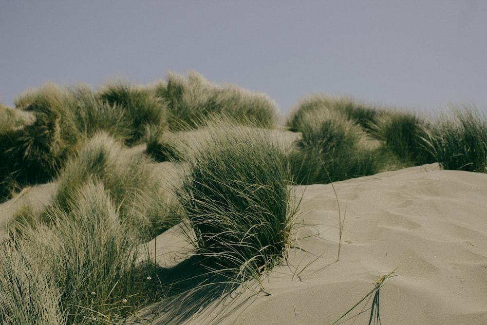 grass on sands