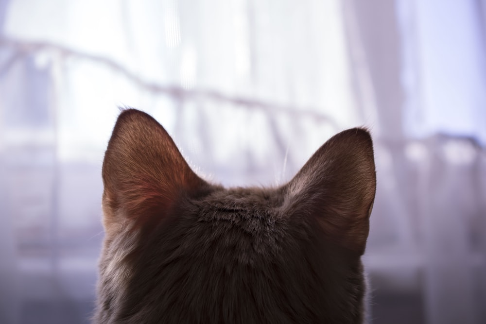 photo of orange tabby cat