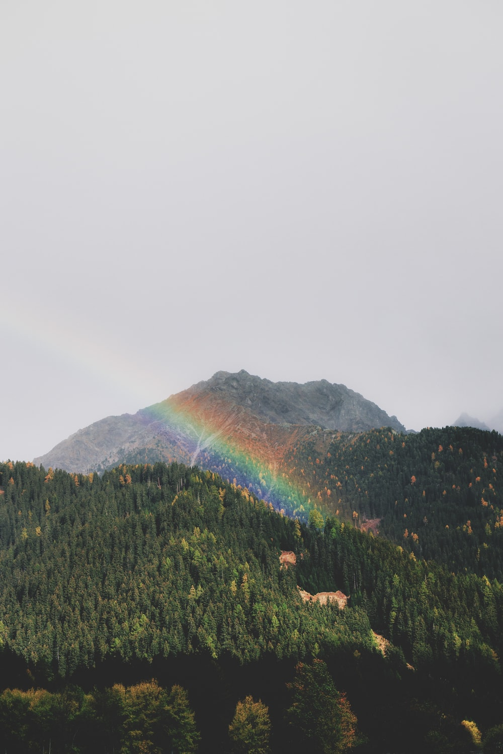 rainbow over green tree covered hill