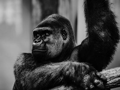 primal ape ape zoom background