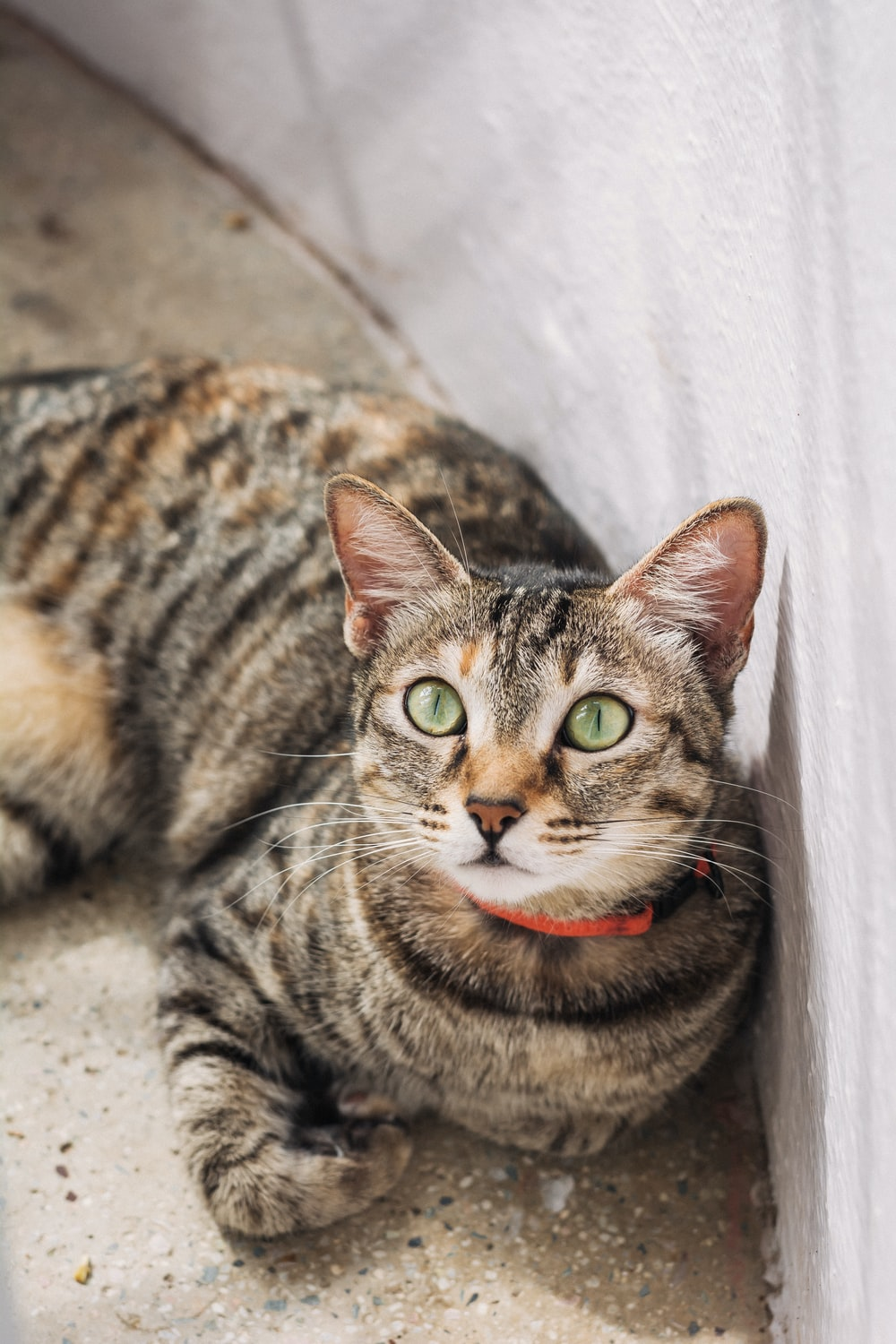 black and brown tabby cat lying down on the floor