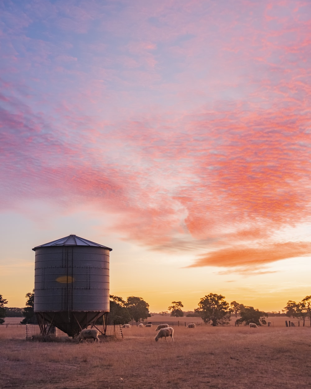 farm sunset view