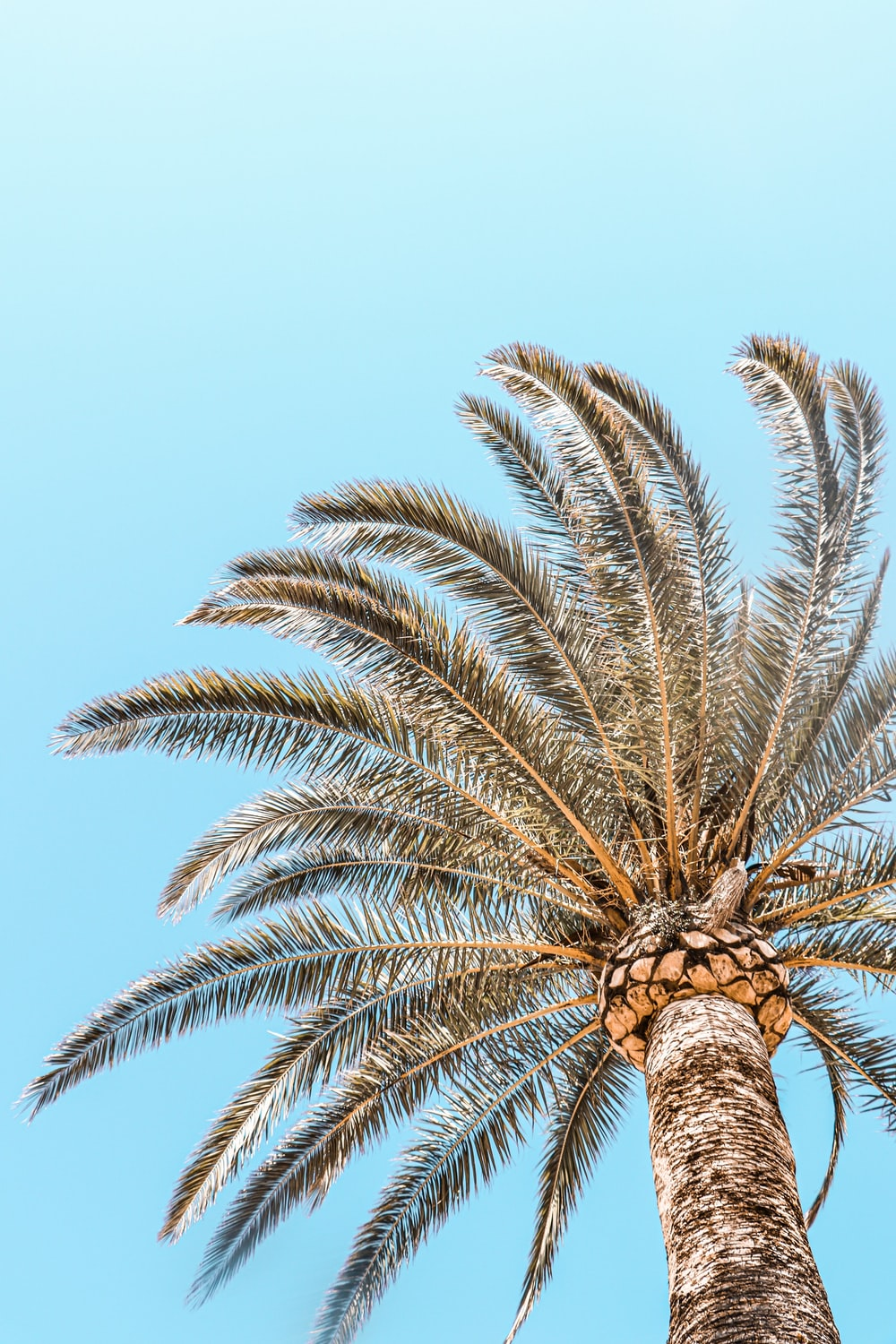 low-angle photography of a green palm tree under a calm blue sky