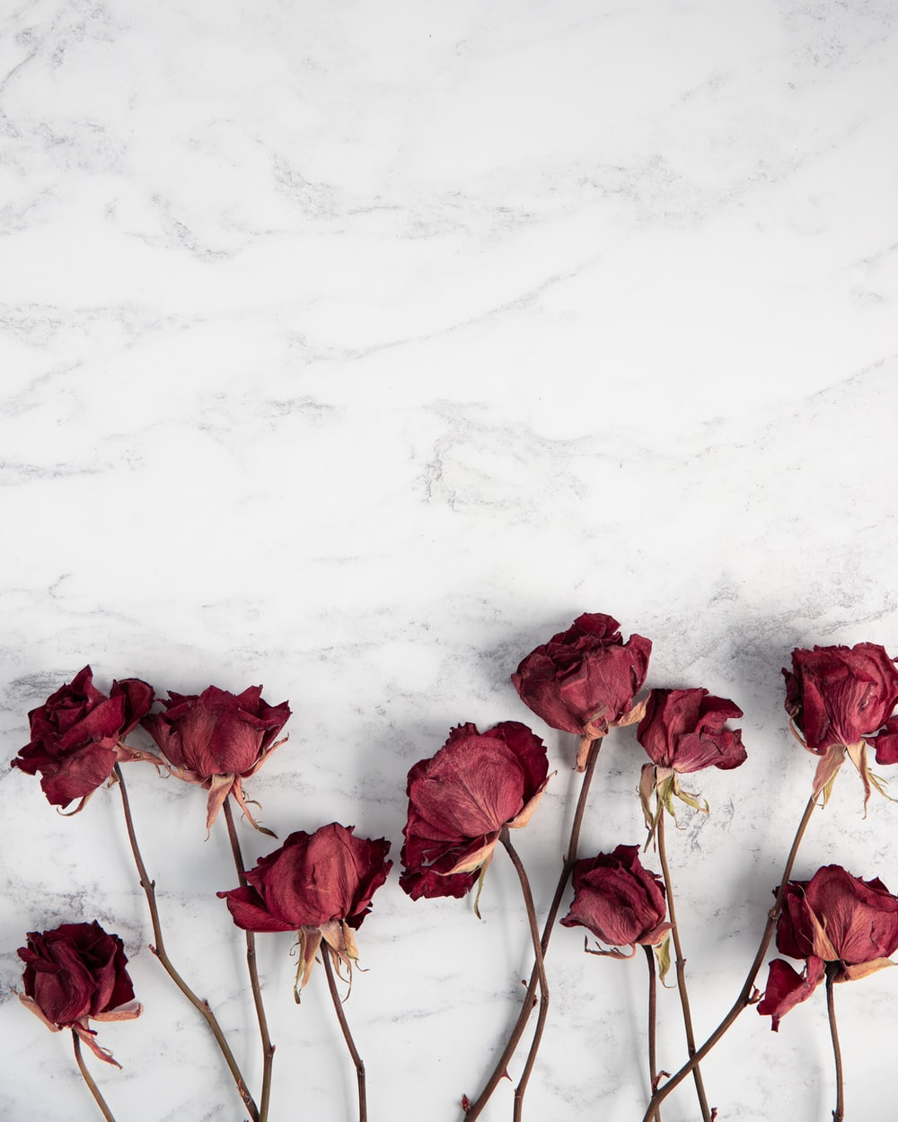 red roses on white surface