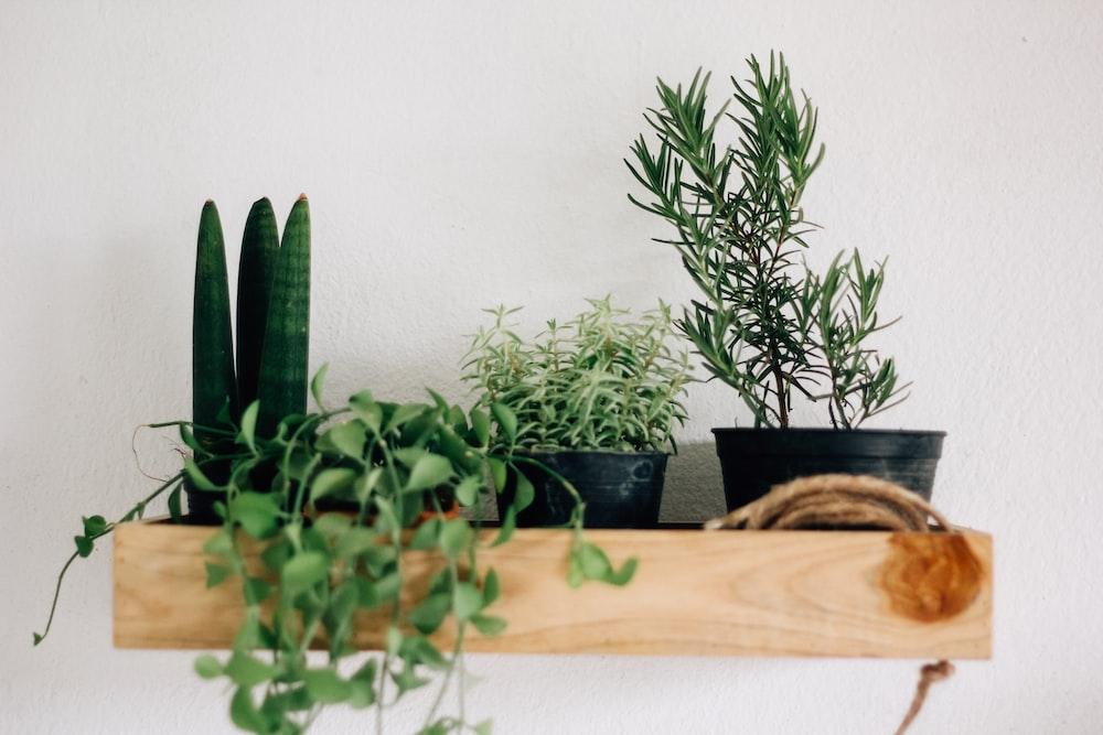 four assorted-indoor plants on brown floating shelf