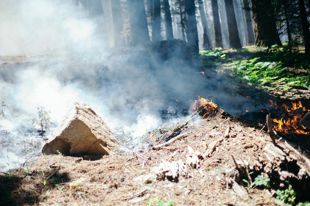 brown wood log on brown soil