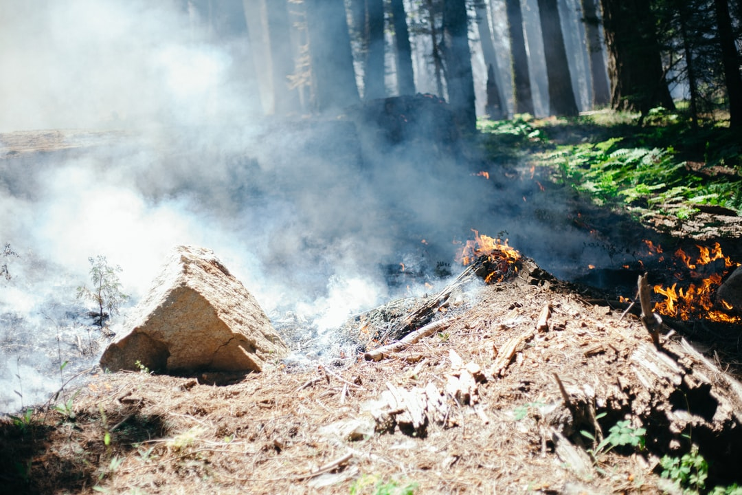 Controlled burns and forest fire in Sequoia National Park