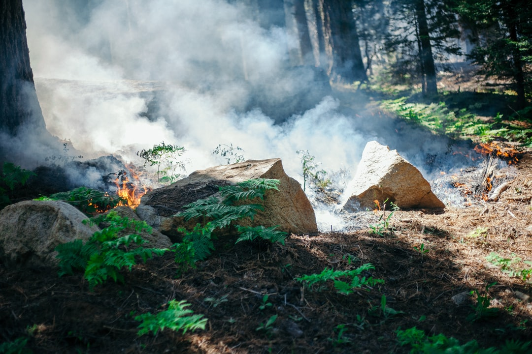 Forest fire from a controlled burn in Sequoia National Park