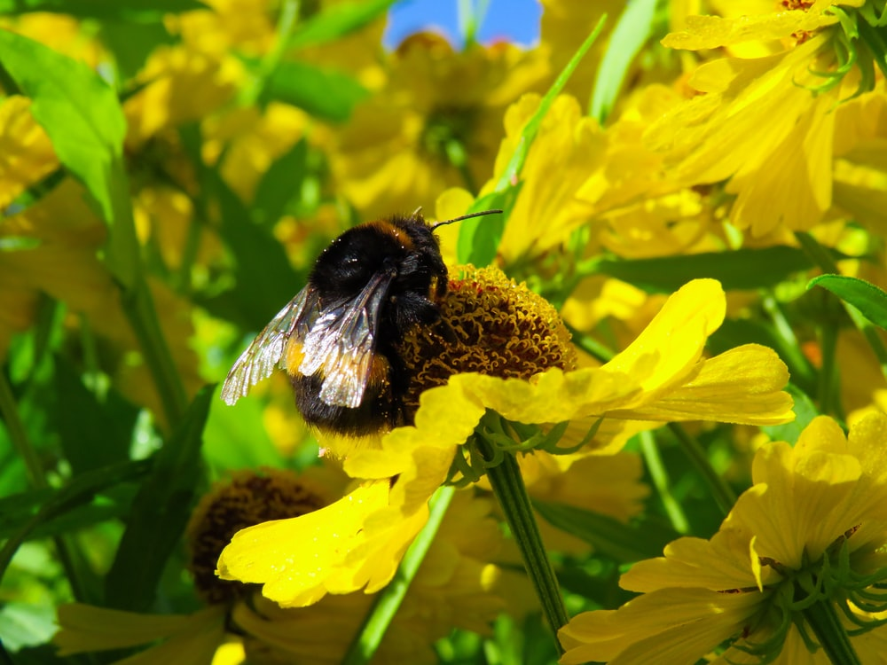 black and yellow bee close-up photography