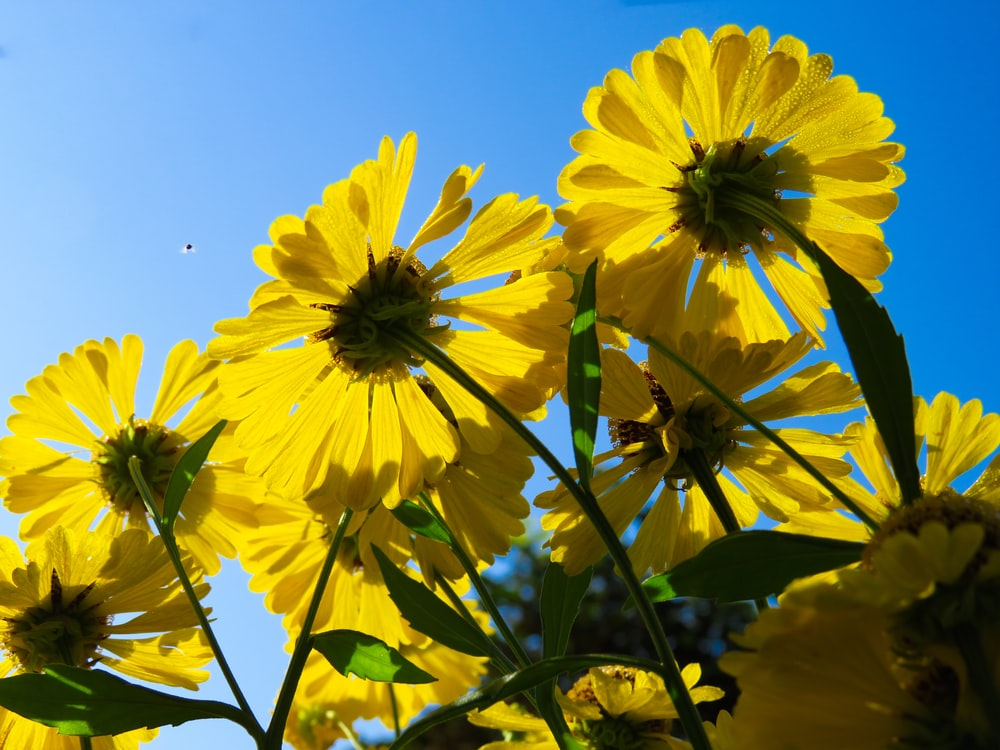 yellow flowers during day