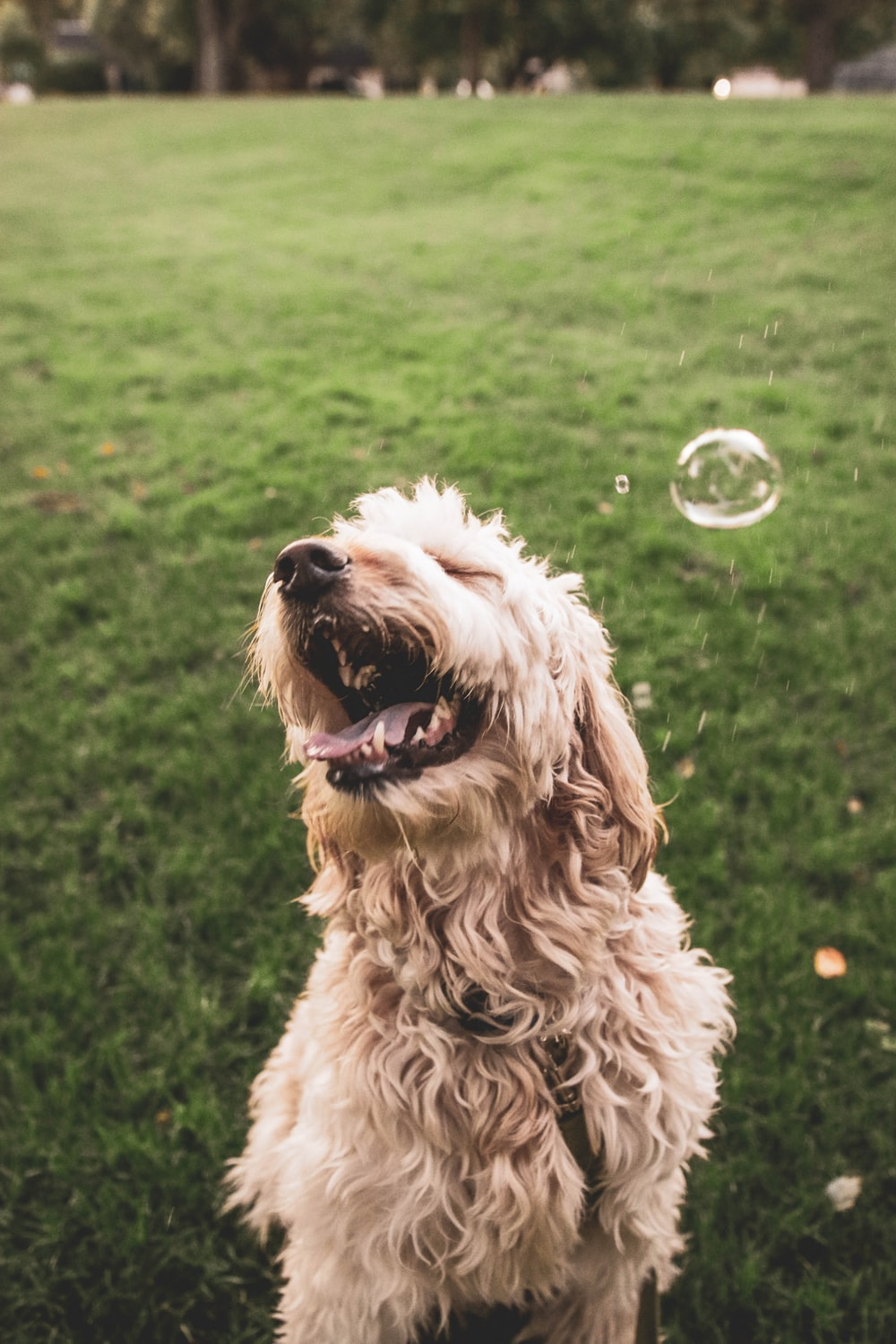 brown dog playing with bubbles