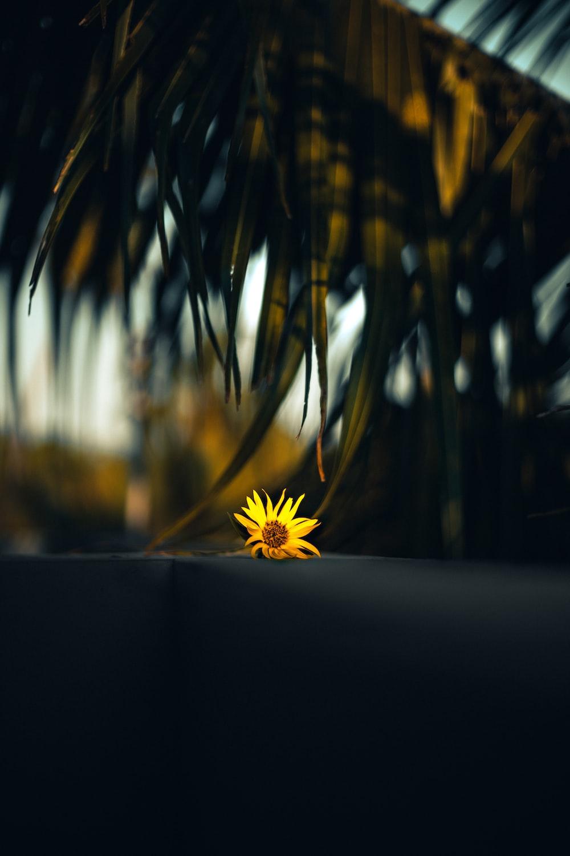 selective focus yellow flower