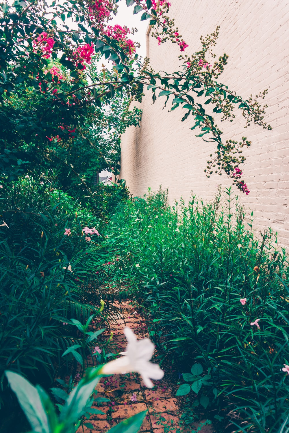 narrow pathway surrounded by plants and flowers