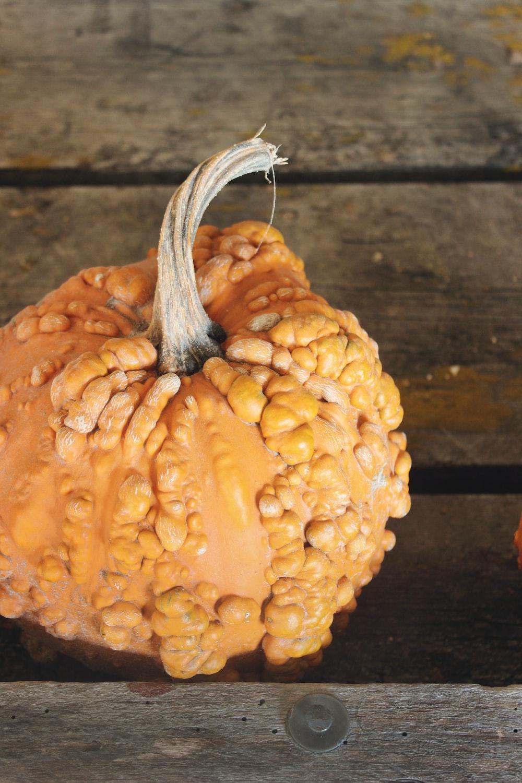 orange umpkin