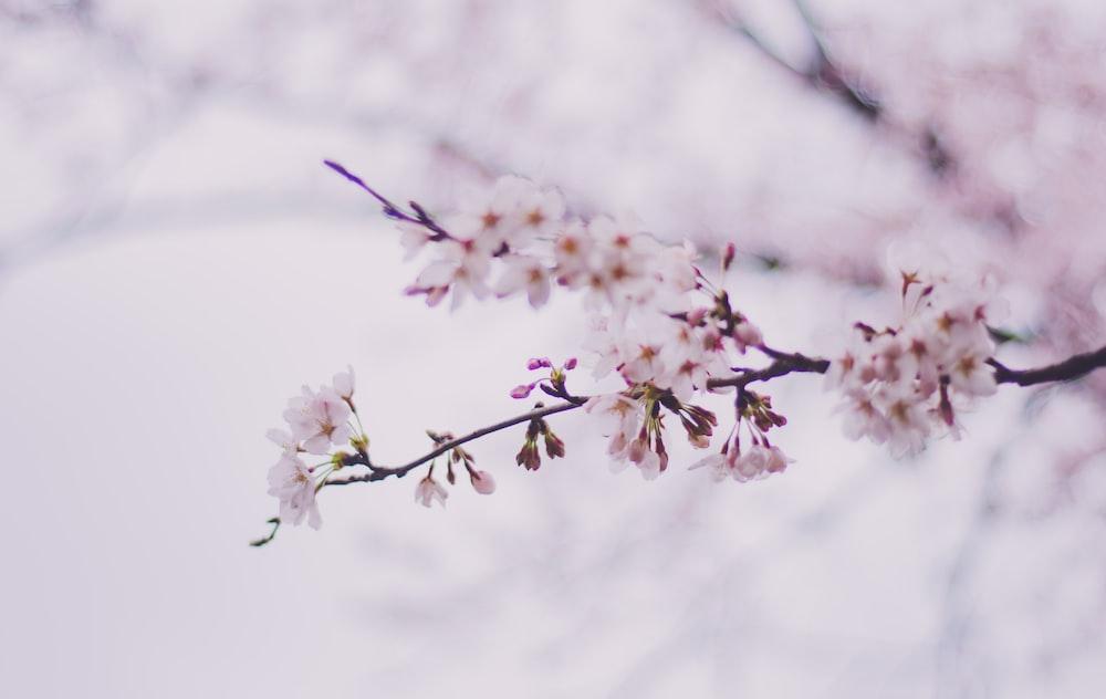 white petaled flower tree