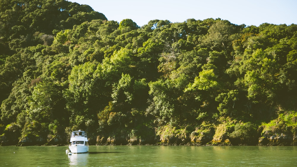 white yacht on body of water viewing trees during daytime
